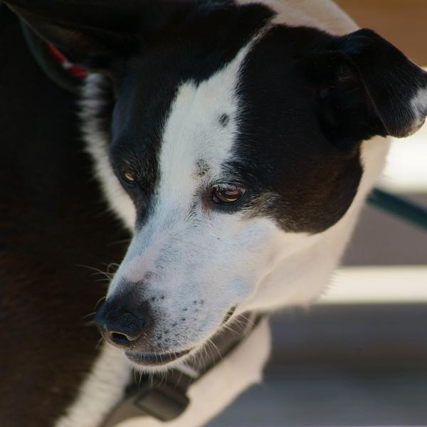 SPO Hund_2_klein