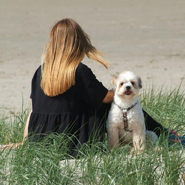 SPO Hund_5_klein
